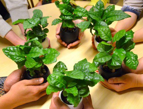 旭川でお茶の木を育てよう!